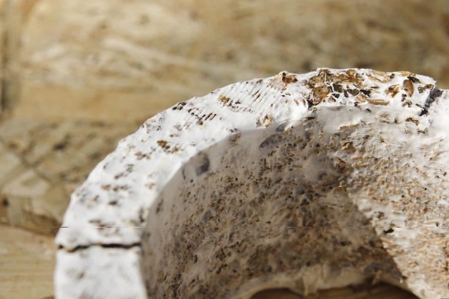 mushroom based material