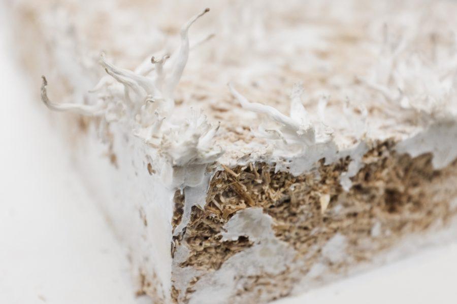 Mushroom material sample